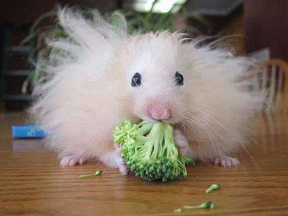 mouse broccolo
